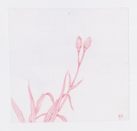 49 Flowers, #47 (2016)