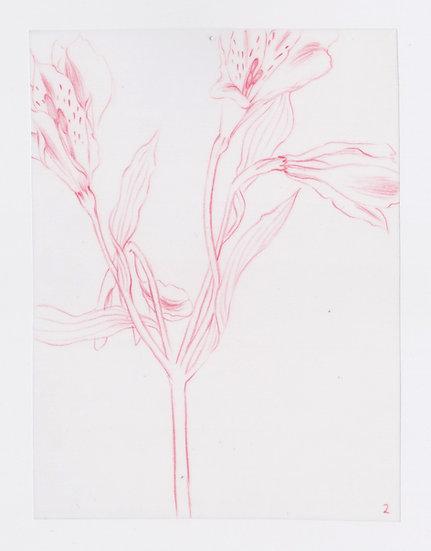 49 Flowers, #2 (2016)