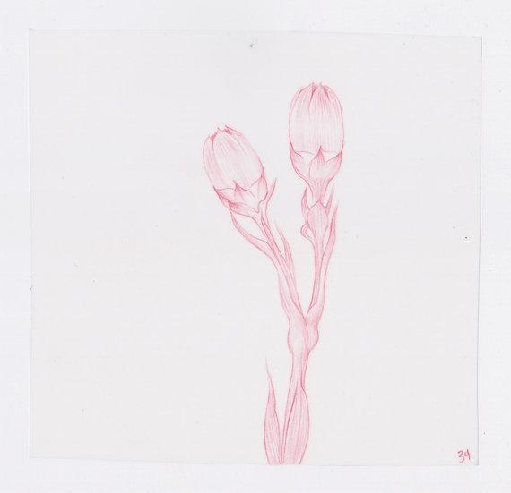 49 Flowers, #34 (2016)