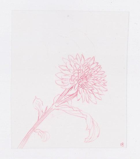 49 Flowers, #18 (2016)