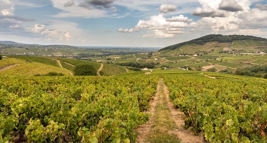 vineyards_2x1-1360x730.jpg