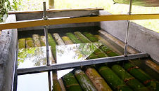 storing_bamboo_in_water