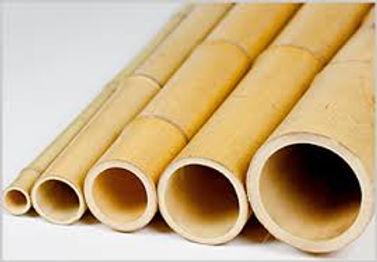 tonkin-thin-wall-bamboo.jpg