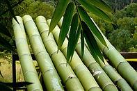 Green-Bamboo-Poles