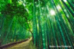 Bambo Furniture, Bamboo Gazebo