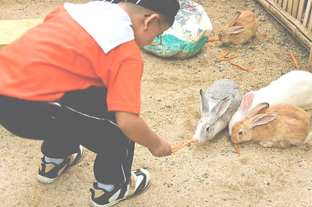 Boy feeding the rabbits
