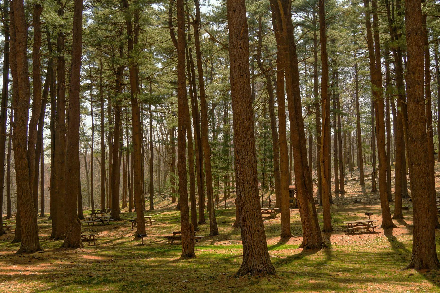 Den Wald vor Bäumen nicht sehen