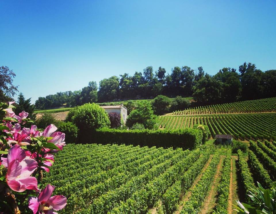 Wine country in Bordeaux