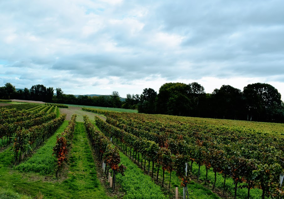 I dreamed of a land of endless vineyards.