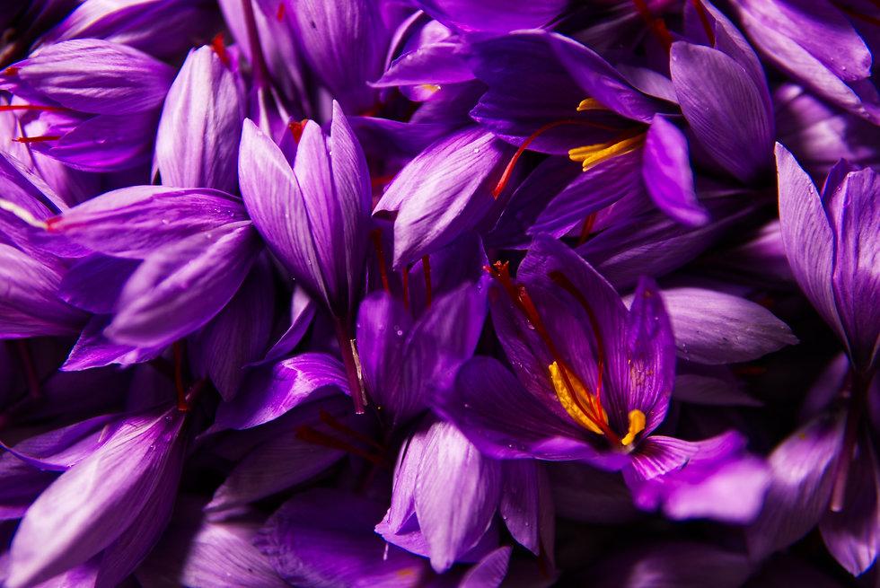 saffron-4562092.jpg