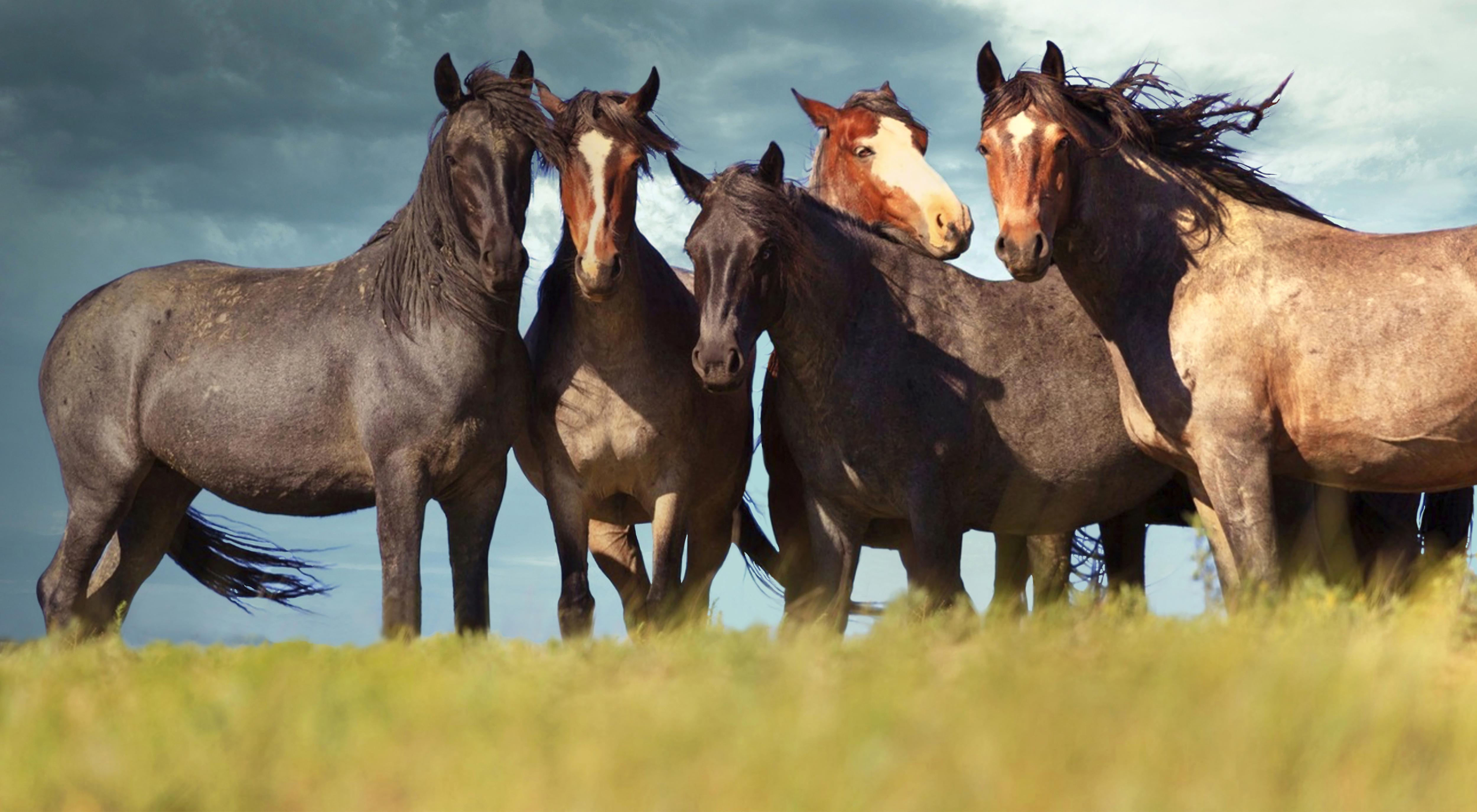 Mustang Ladies' Club