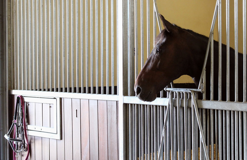 Optimized-Horse in Stable1.jpg