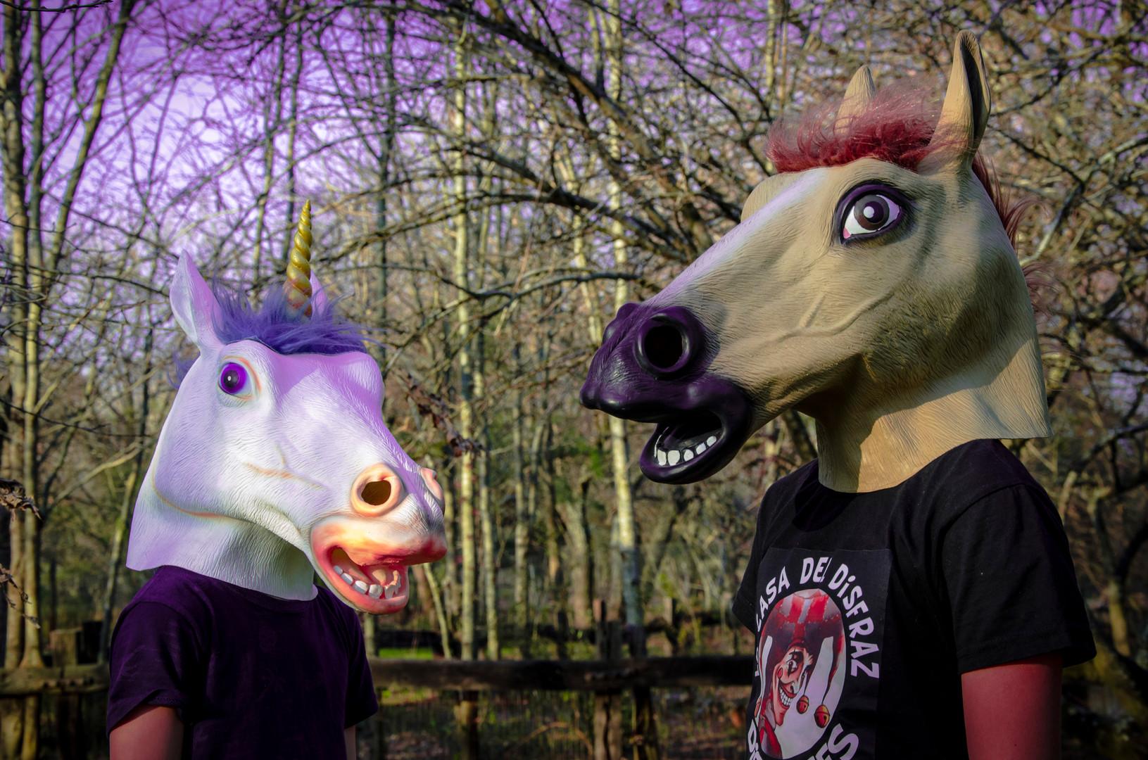 caballo-3.JPG