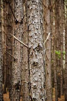 bosque.tronco.JPG