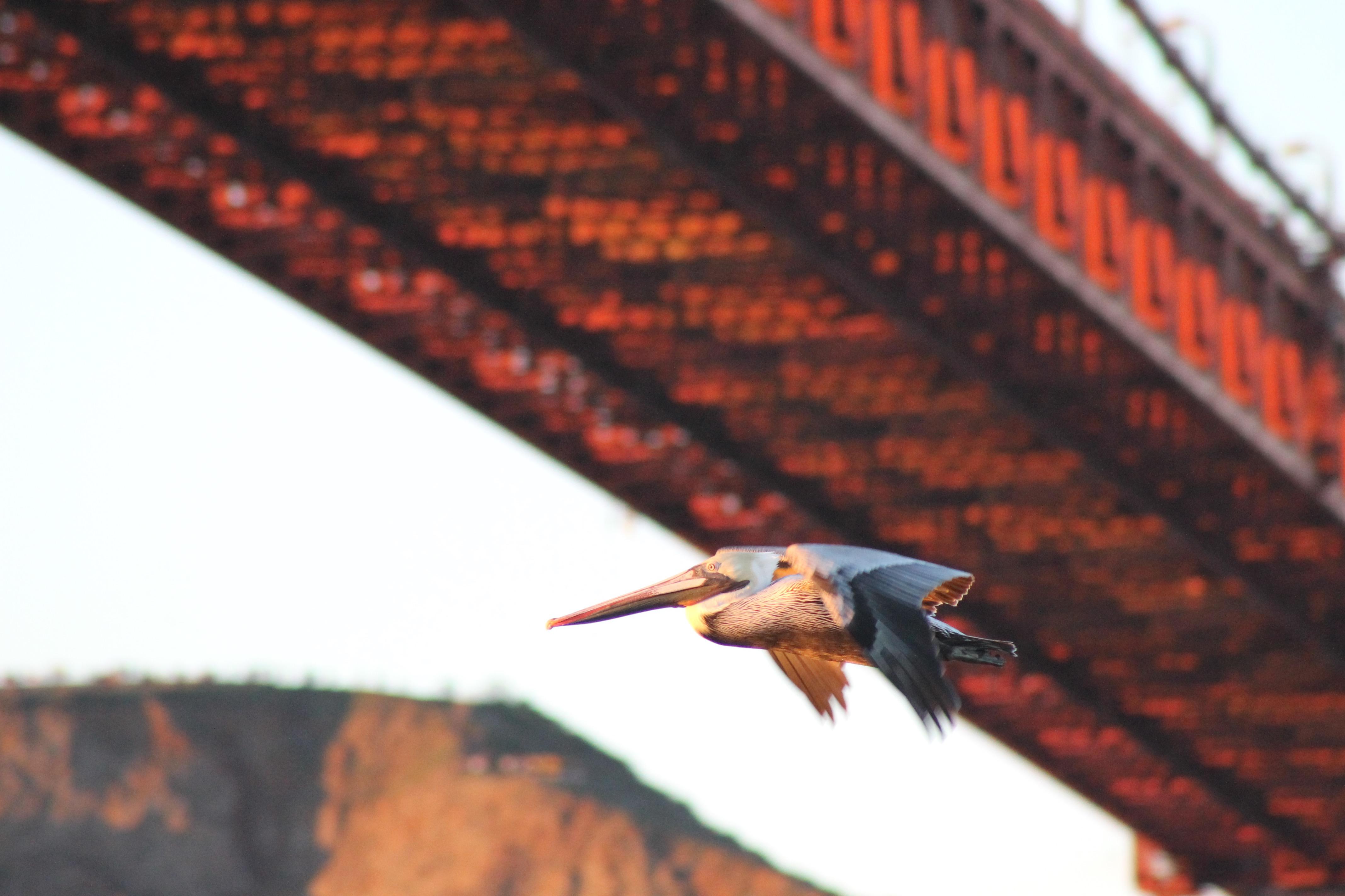 Under the Bridge by Rebecca Johnson