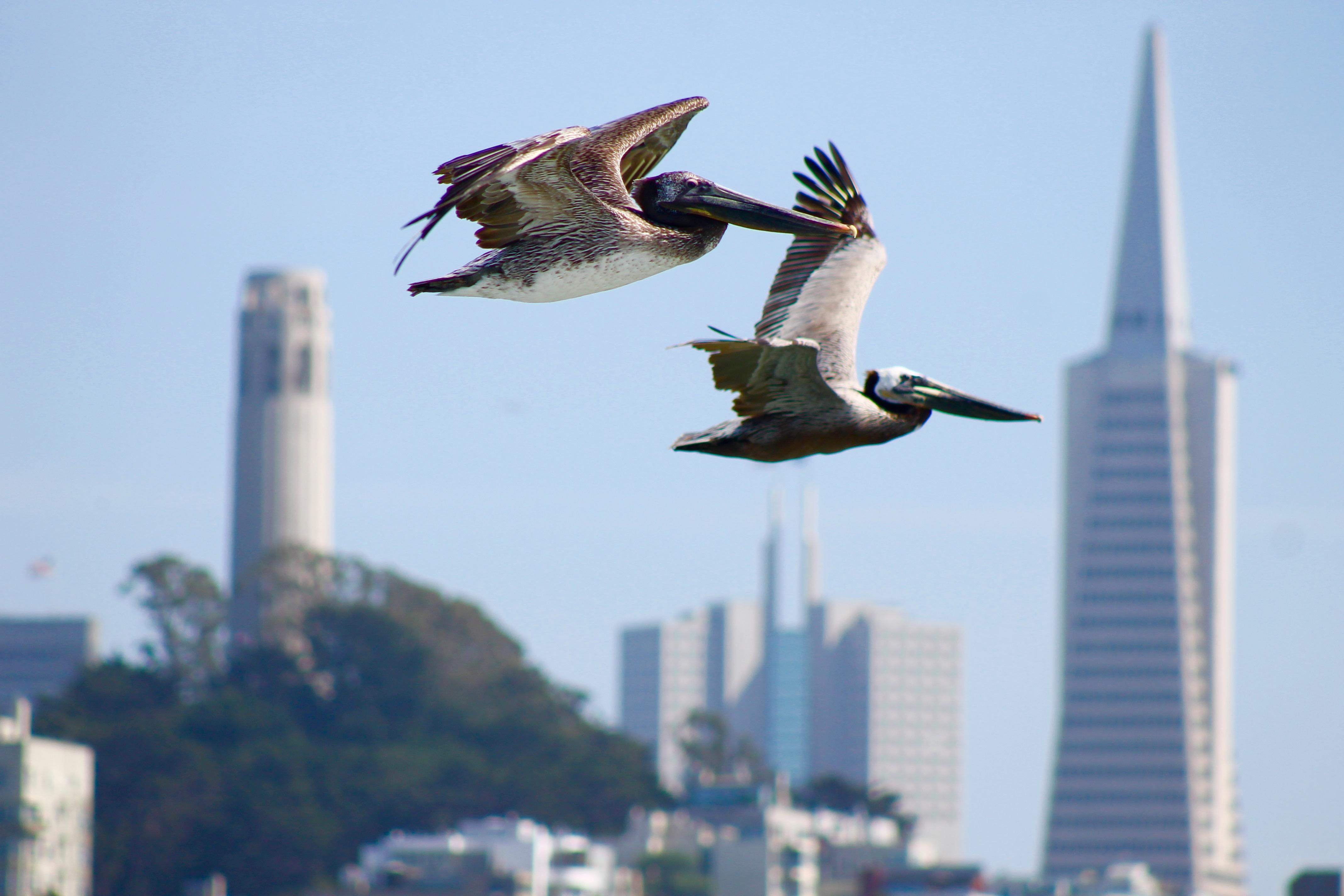 Flight Between  by Rebecca Johnson
