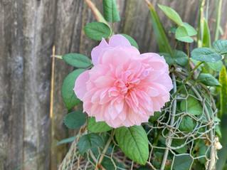 September Garden Blooms