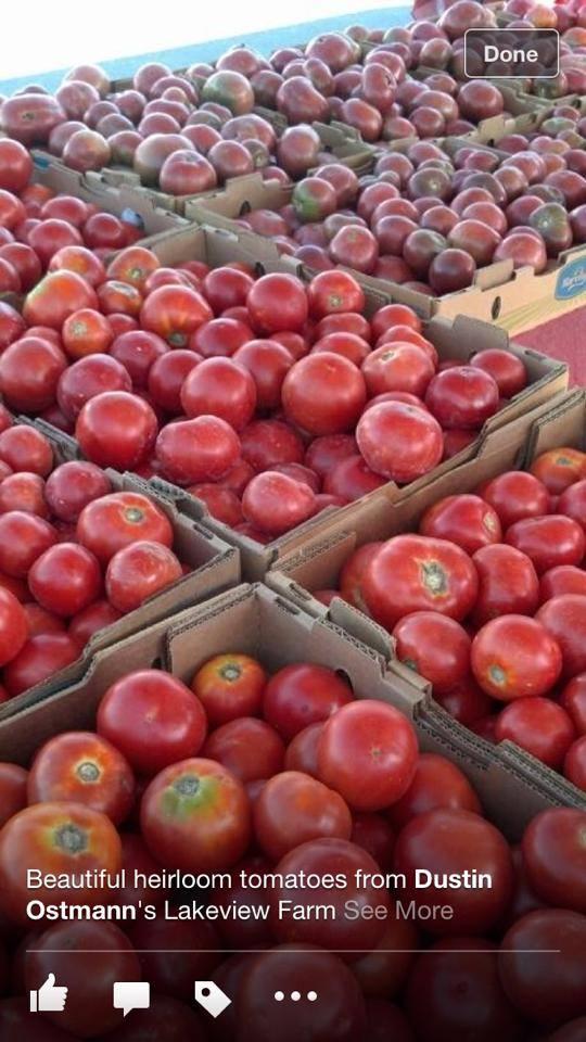tomatoes 2013.jpg
