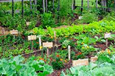 Secrets-of-a-High-Yield-Gardening.jpg