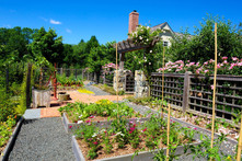modern-homestead-garden2.jpg