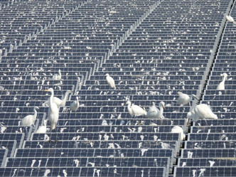If you are planning to build a solar farm, you will appreciate this tip
