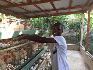 schneider poules.jpg