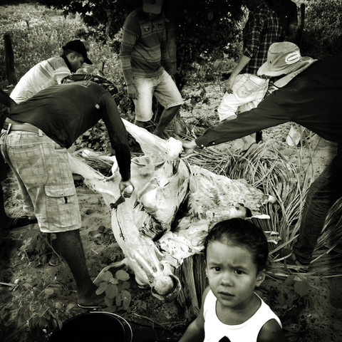 Girl watches as her family slaughter a cow for a weeding ceremony in northern part of Brazil.  In a region with such a shortage of water, it is important to have in mind that in average, for the production of 1 pound of beef, it is necessary 2k gallons of water, when considering the water consumed by the animals as such as the water used for the production of the livestock food.