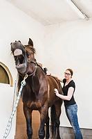 Liisa Puupponen Uusitalon hevostila laserhoitolaite Theralux