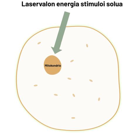Miten laservalo hoitaa kehoa?