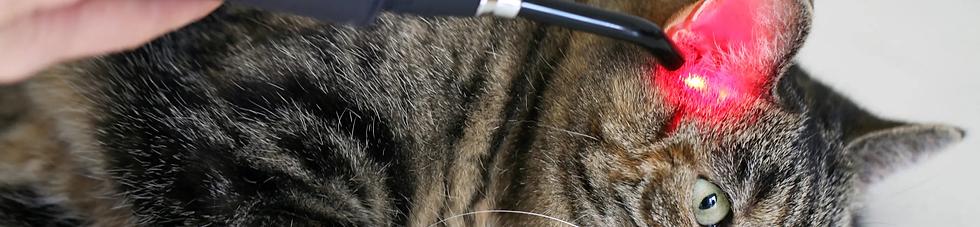 Kissa laserhoito Theralux.webp