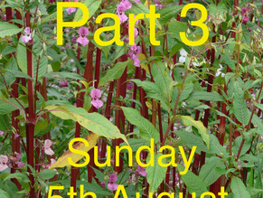 Mayford Village Society Balsam Bash (Part 3) 5 th August 2018 at 10am