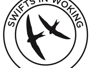 Swifts in Woking Project.