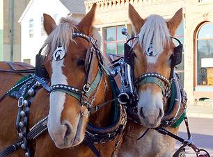Horse Drawn Carriage Ride Dillon MT.jpg
