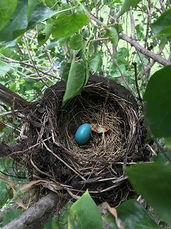 jen_alward_bird_nest_photo.JPG