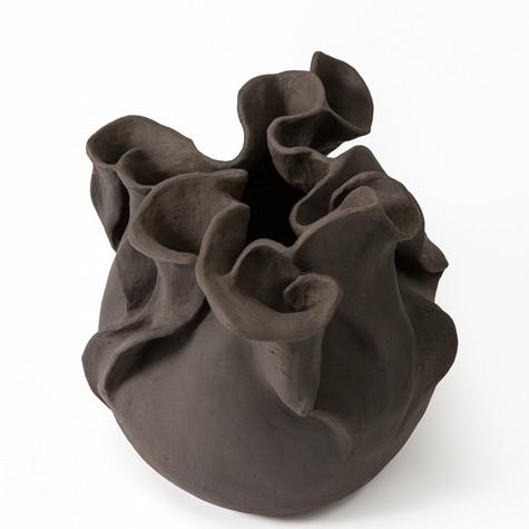 Hosta (Black) 2016