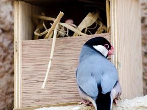 Kuşlarda Hiperparatiroidizm