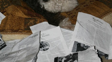 "Archived ""PR"" (Puppydog Reports) from Barking News"
