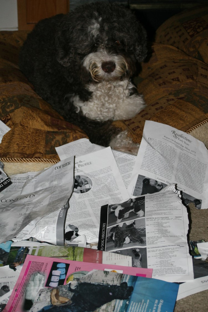 """Archived """"PR"""" (Puppydog Reports) from Barking News"""