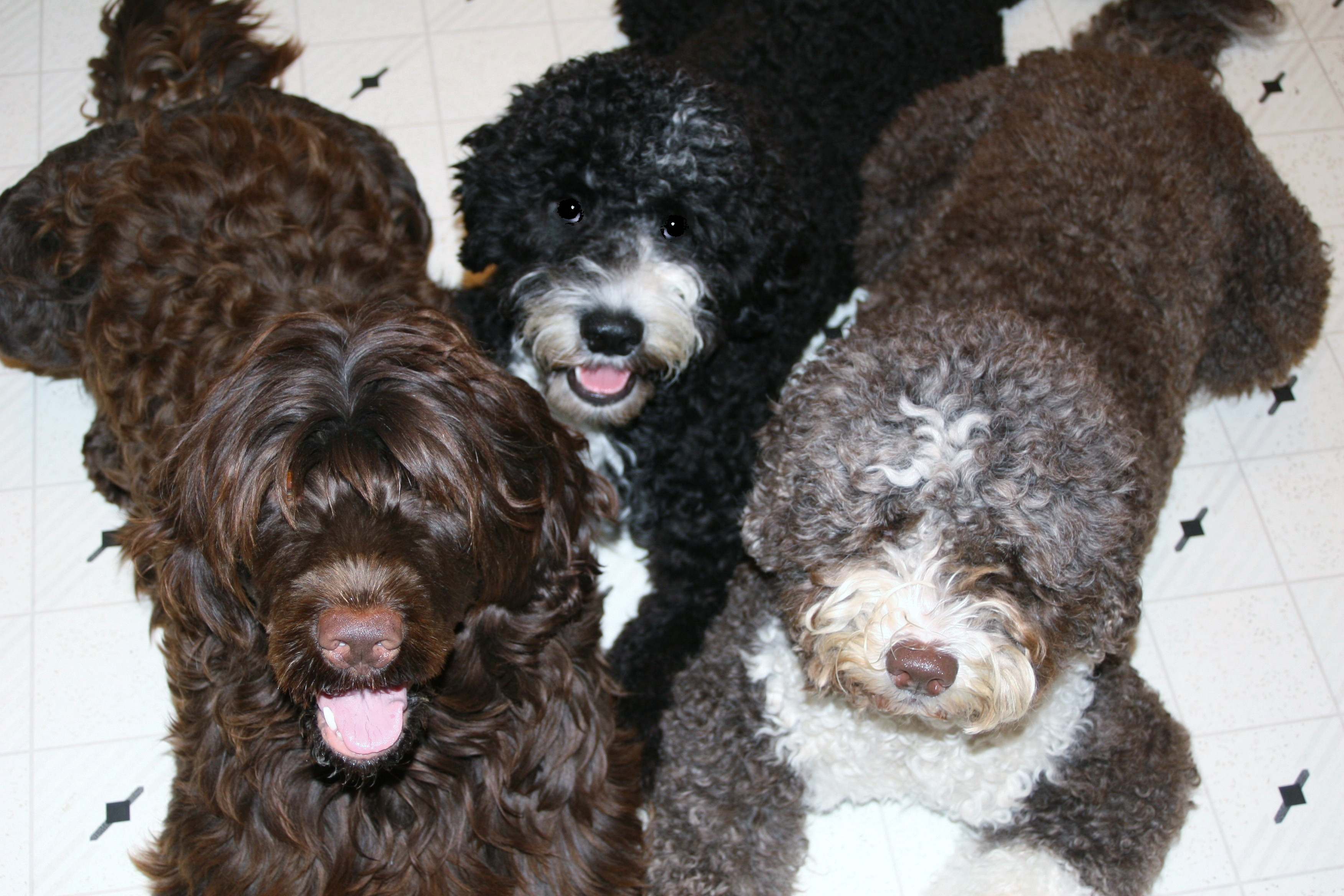 three doggies