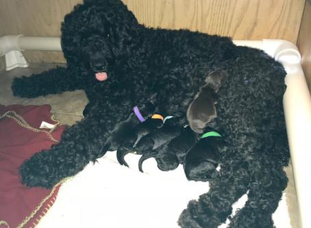 Diva's Pups are Born!