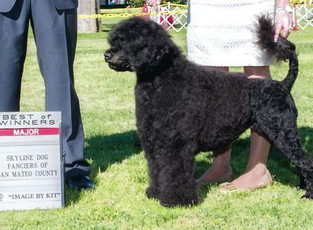 Diva Puppies - Fall 2017 Breeding Planned