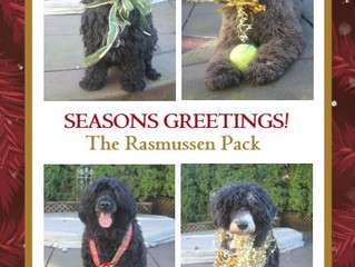 Happy Holidays from the Rasmussen Pack!