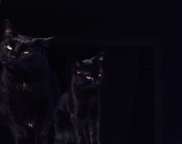 Love my black cats 🐾🖤