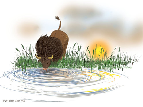 """Ray the Buffalo Enjoys Water"", Book Illustration Print#3, 7"" x 5"""
