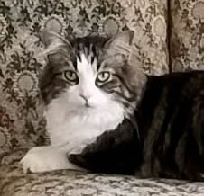 JAZPER the Cat appearance