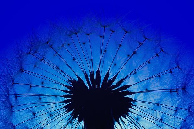 blue 3 pexels-johannes-plenio-1146715 -