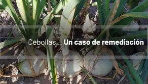 Cebollas... un caso de remediación