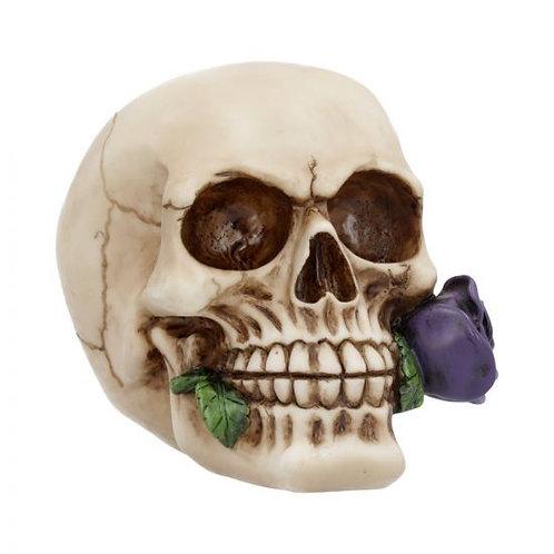 Purple Rose from the Dead Skull