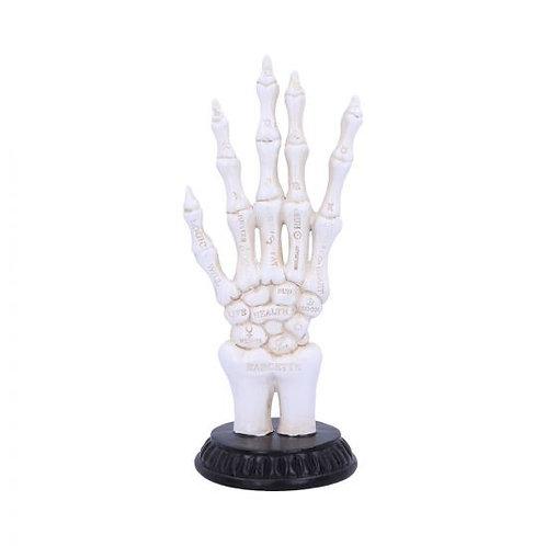 Skeletal Palmistry
