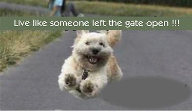 Dog escaping.jpg